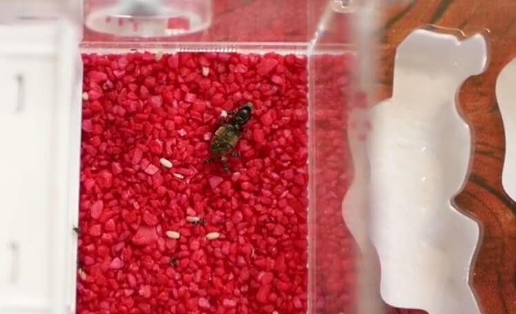 Корм для колонии муравьев